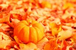 photo: pumpkin in fall leaves